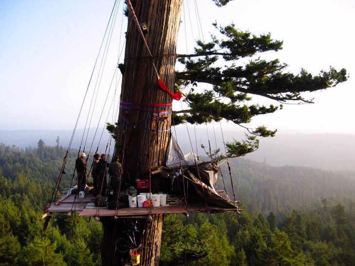 The impressive platform built for the Jerry Treesit in Freshwater, CA as see on August 12, 2004. Photo: Aaron Maret.